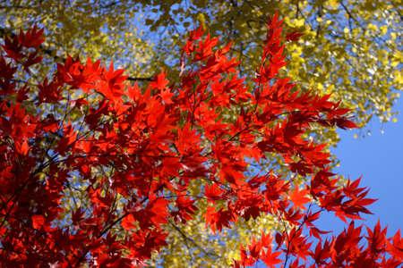 yeşillik: fall foliage at Boston