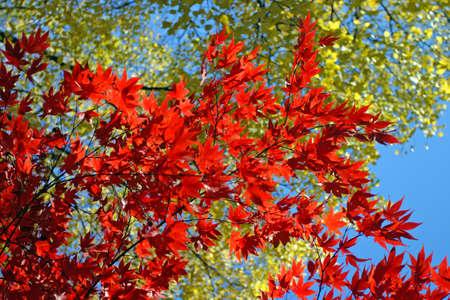 Stock image of fall foliage at Boston
