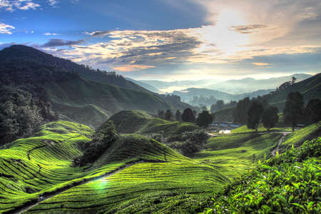 highland: Tea plantation at the Cameron Highland, Malaysia Stock Photo
