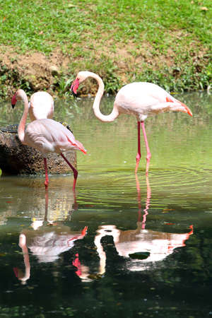 stock image: Stock image of flamingo Stock Photo