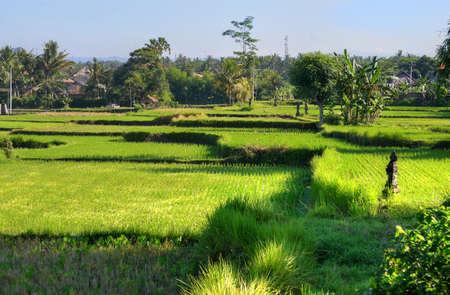 ubud: Ubud palace, Bali, Indonesia