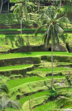 Ubud  , Bali, Indonesia Stock Photo