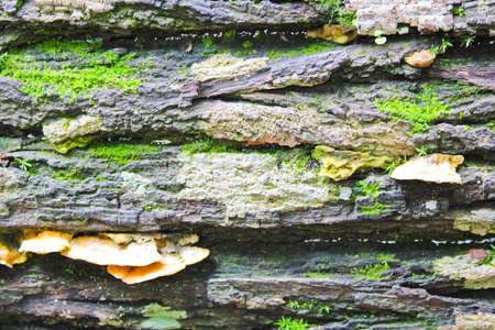 Moss, mushroom and grey bark background photo