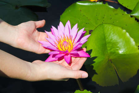 Colorful lotus in white skin ladys hands photo