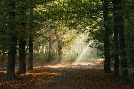 Lightbeams schijnt door de bomen op een herfst ochtend