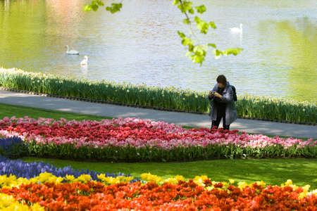Landscape with swans and tulips in spring photo