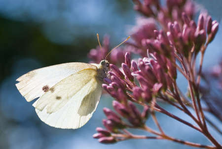 A small white resting in the sun photo