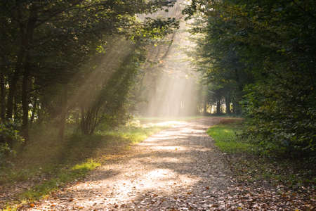 Rays of sunlight on the path in the forest photo