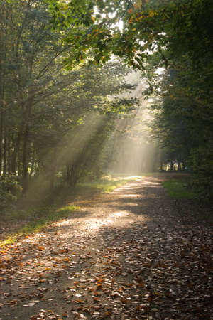 Sunbeams are falling through the trees in autumn forest photo