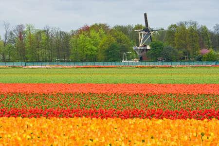 Mill met lagen van kleurrijke tulips op voorgrond Stockfoto