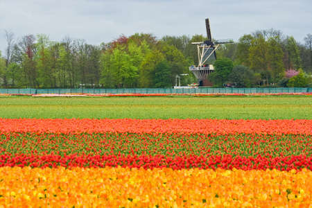Mill with layers of colorful tulips in foreground