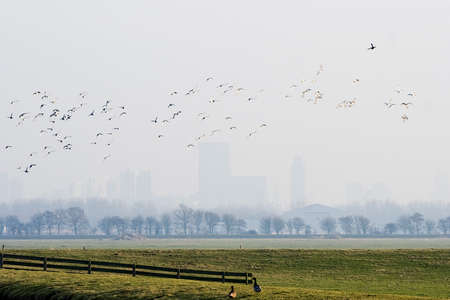 polder: Dutch polder on misty winterday, city buildings in the background