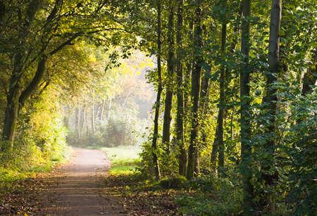 Wandelpad in het bos in de vroege ochtend zon Stockfoto