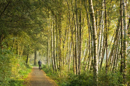 Path with birch trees in the morning sun Stock Photo - 4362791
