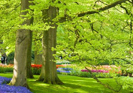 Nationaal park met Beuken bomen en bloemen in voorjaar tijd