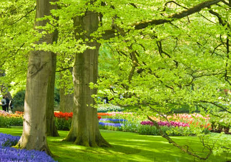 Park with beech trees and flowers in spring time