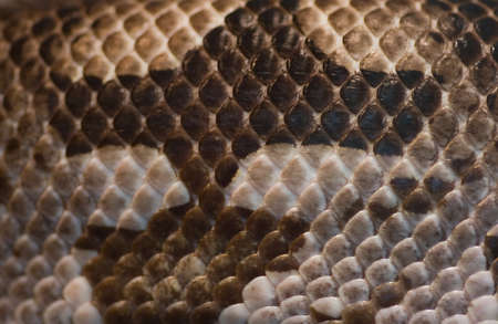 Close up part of snake skin - brown and white colors Stock Photo - 4577991