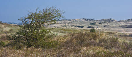 Landscape with dunes and bushes in spring Stock Photo - 4694464