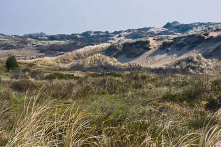 Dune landscape on beautiful morning in april Stock Photo - 4712417