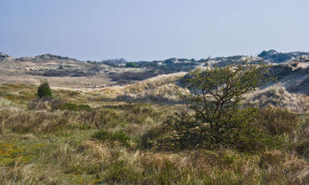 Dune landscape with bushes on day in spring Stock Photo - 4712421