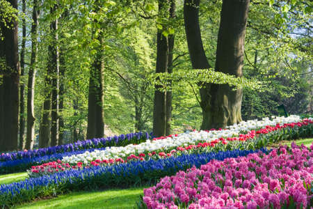 Pink, white and blue flowers in the park in spring Stock Photo