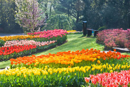 Rainbow of tulips in  the park on  a sunny day spring