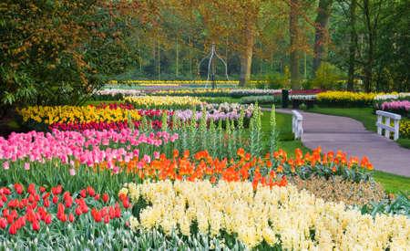 Veel van de lente bloemen in het park op een zonnige dag april Stockfoto