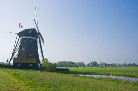 watermills: Dutch watermill in polder with farms and horses in spring