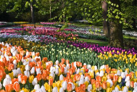 Duizenden kleurrijke bloemen in de lente park april ochtend