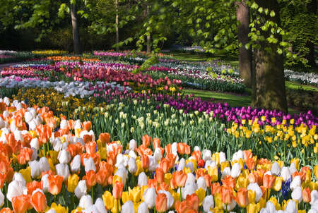 Thousands of colorful spring flowers in park on april morning