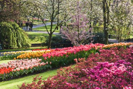 Prachtige spring garden in april met blooming cherry bomen Stockfoto