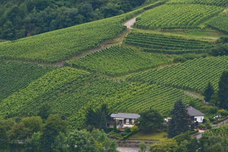winegrowing: View over vineyards on the hills in summer