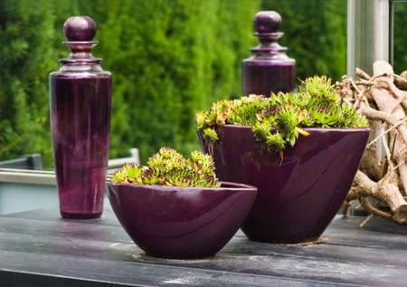 Purple glass bottles and vases with plants on table in the garden in summer