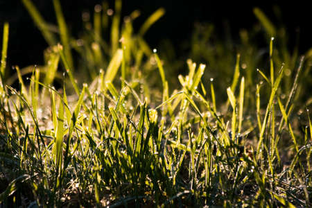 dewdrops: Early morning sun on grass with dewdrops