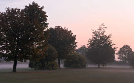 grassfield: Trees on grass-field in the morning fog at sunrise Stock Photo