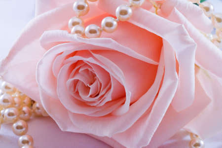 pink pearl: Soft pink rose with a pearl necklace