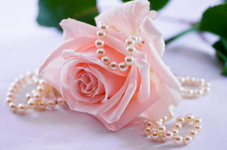 Soft pink rose with a pearl necklace Stock Photo - 5864975