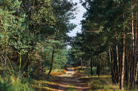 Path in the forest on sunny summer morning - horizontal image photo