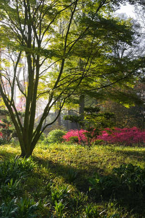 Japanese garden on a sunny morning in early spring photo
