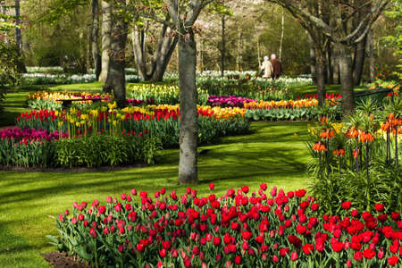 garden landscape: Colorful spring flowers in park on early morning in april