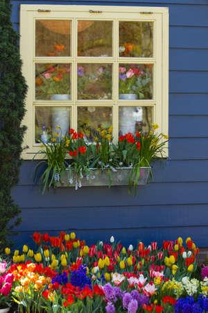 Venster in blauwe muur met kleurrijke bloemen in de lente