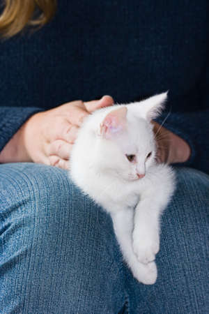 Little white, six weeks old kitten resting after playing Stock Photo - 7187669