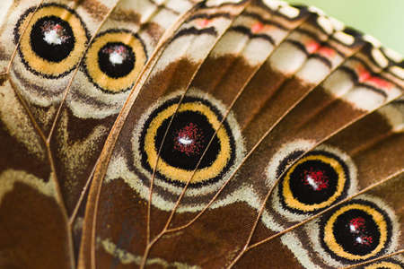 Close-up deel van vlinder vleugel van een Blauwe Morpho