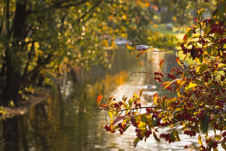Colorful autumn image with sunshine on berries and dewdrops photo