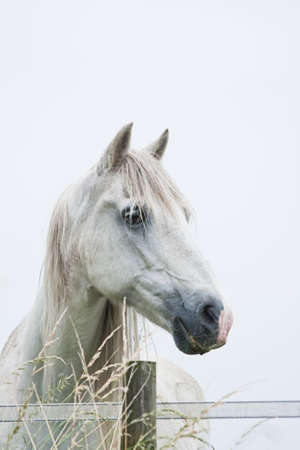 Head of white horse with light blue background - vertical image