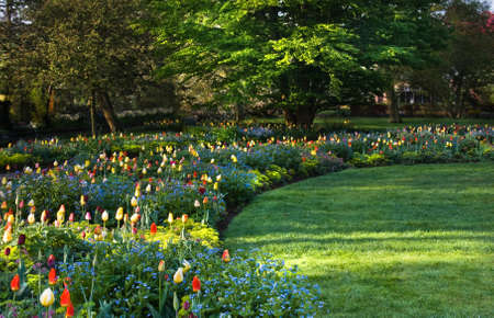 Beautiful and colorful arrangement of blooming springflowers on early morning in park