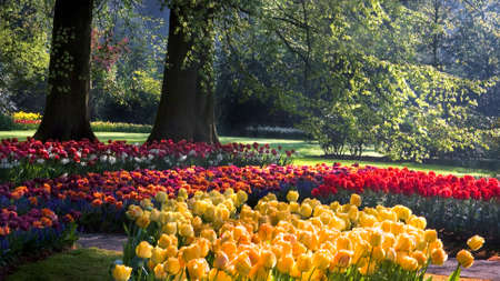 Spring in park with yellow, red and orange tulips