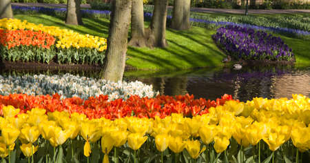 Pond in park in spring with colorful tulips, daffodils and hyacinths