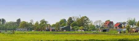 Panorama Dutch country landscape with farms and cows on evening in spring