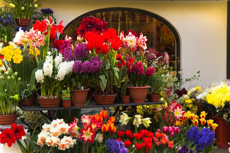 hyacinths: Lots of colorful spring flowers outside a florist shop Stock Photo
